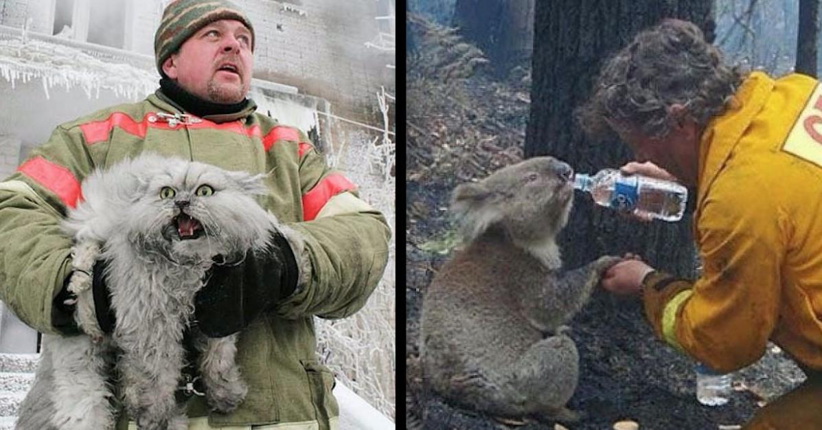 20 Feuerwehrmänner, die ihr Leben für Tiere riskiert haben.